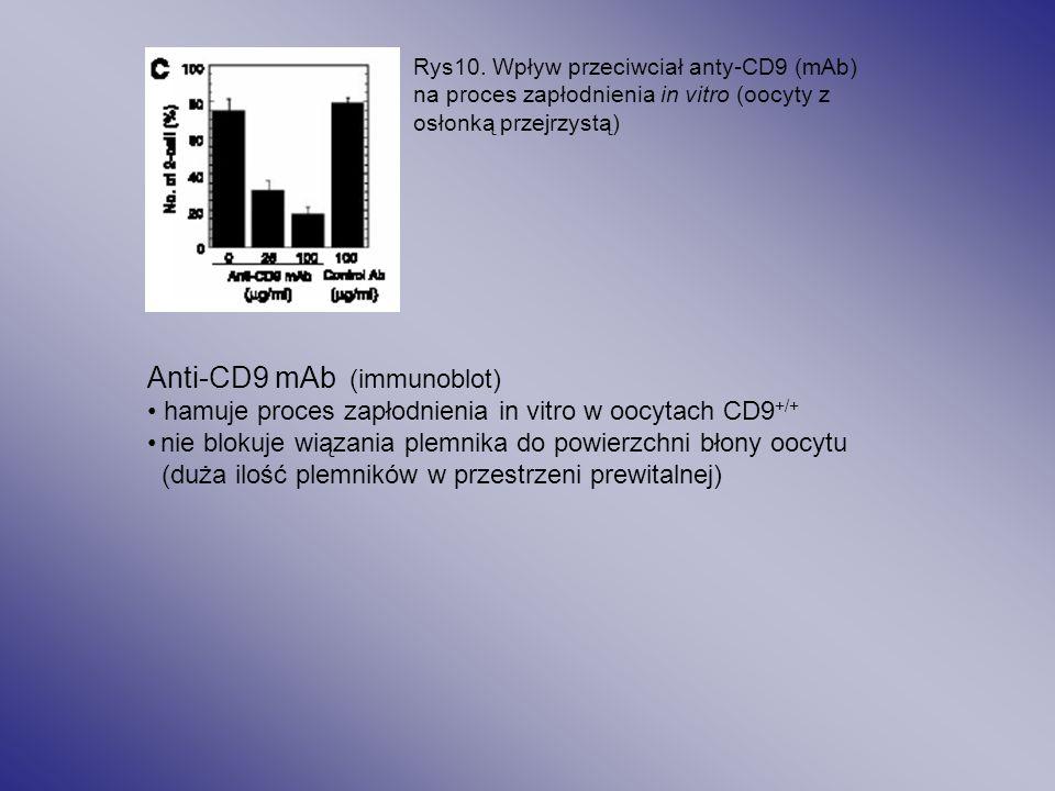 Anti-CD9 mAb (immunoblot)