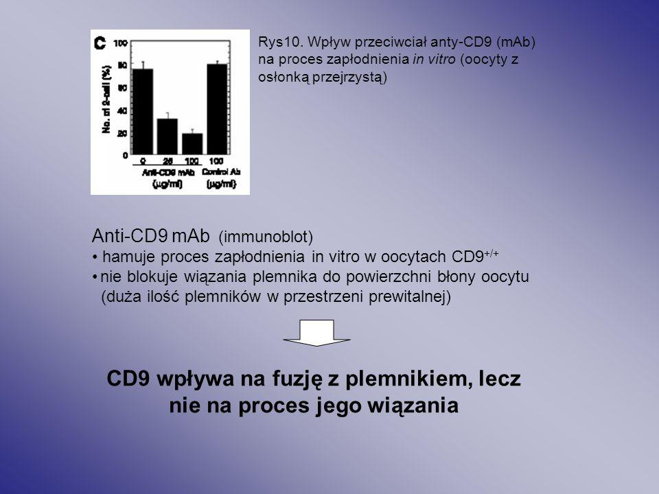 CD9 wpływa na fuzję z plemnikiem, lecz nie na proces jego wiązania