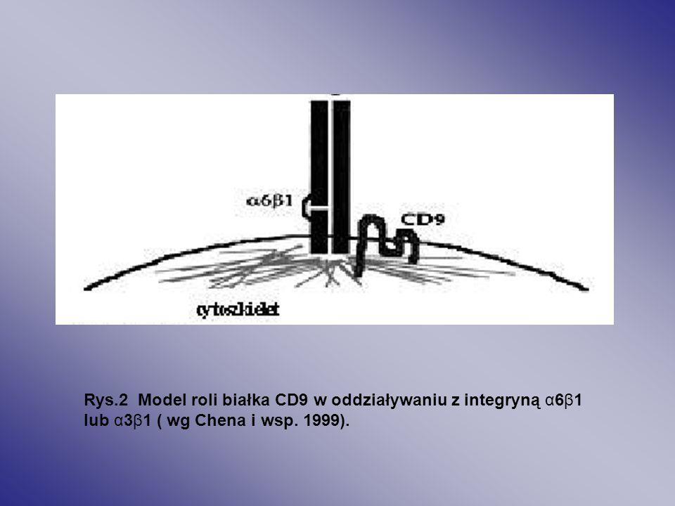 CD9 może oddziaływać z integrynami takimi jak α6β1 lub α3β1.