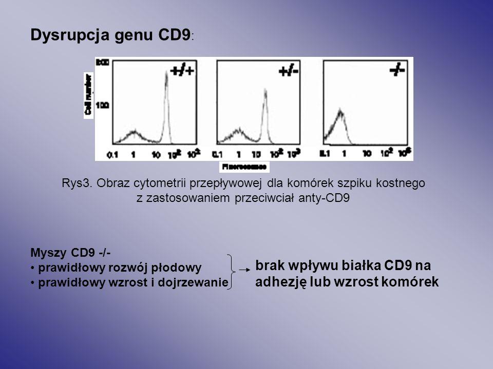 Dysrupcja genu CD9: brak wpływu białka CD9 na
