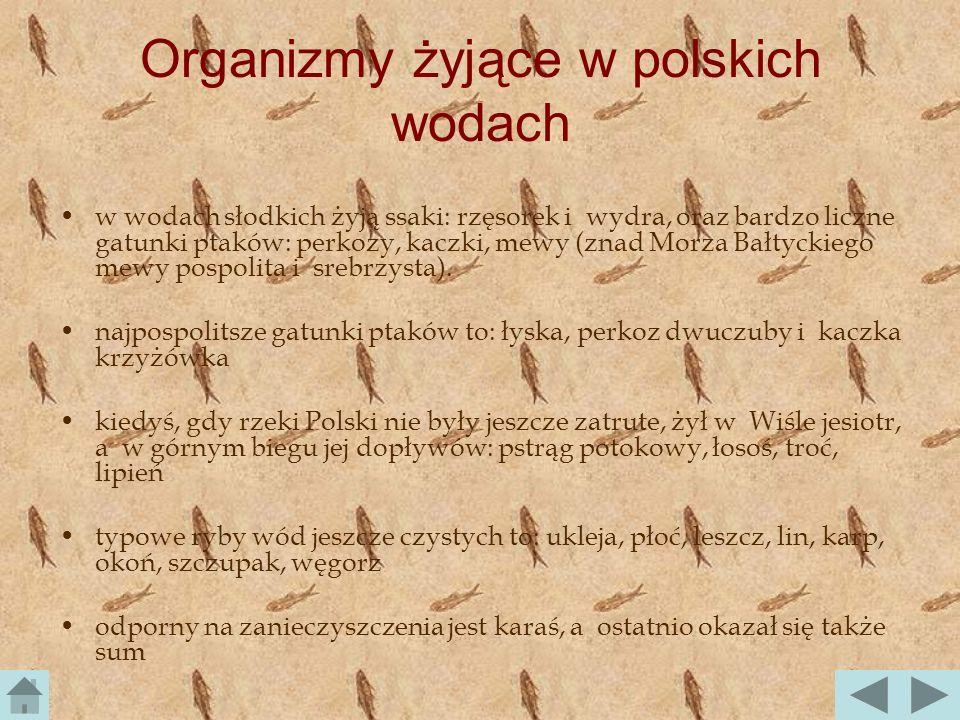 Organizmy żyjące w polskich wodach