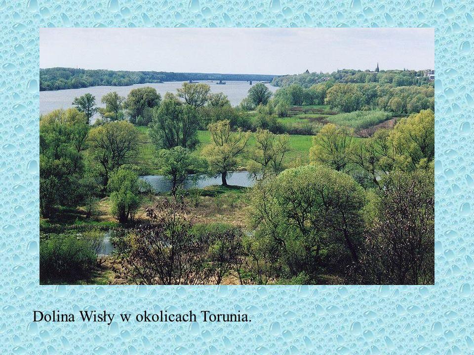 Dolina Wisły w okolicach Torunia.