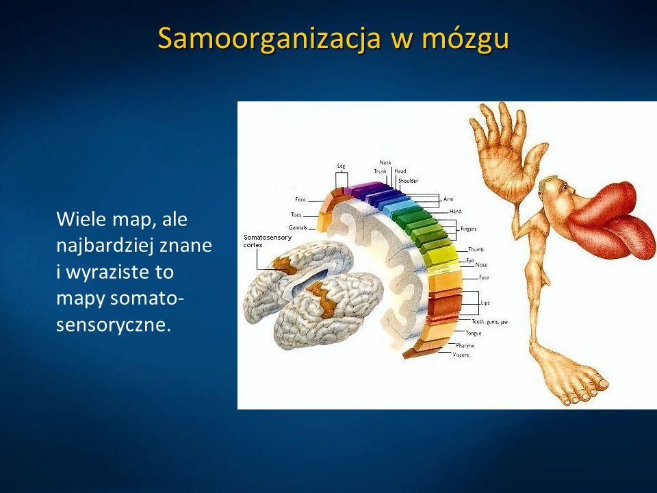 Samoorganizacja w mózgu