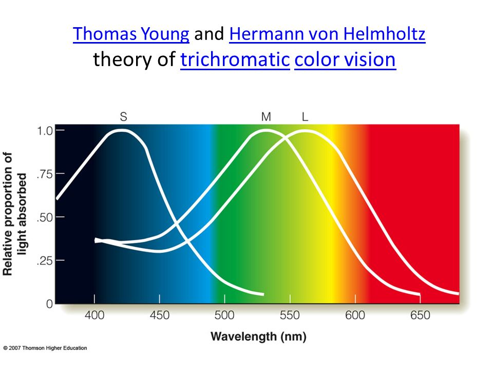 Thomas Young and Hermann von Helmholtz theory of trichromatic color vision