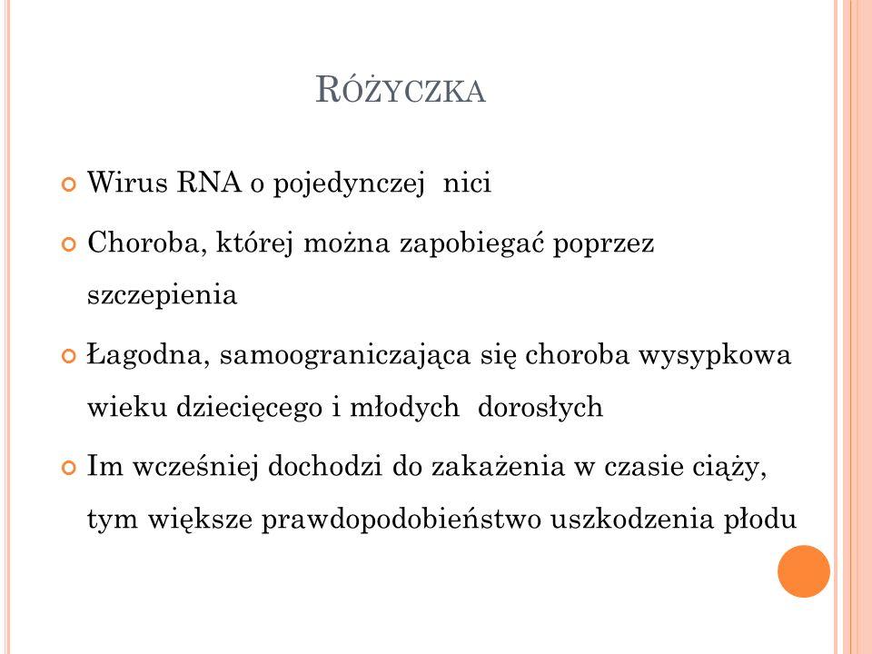 Różyczka Wirus RNA o pojedynczej nici