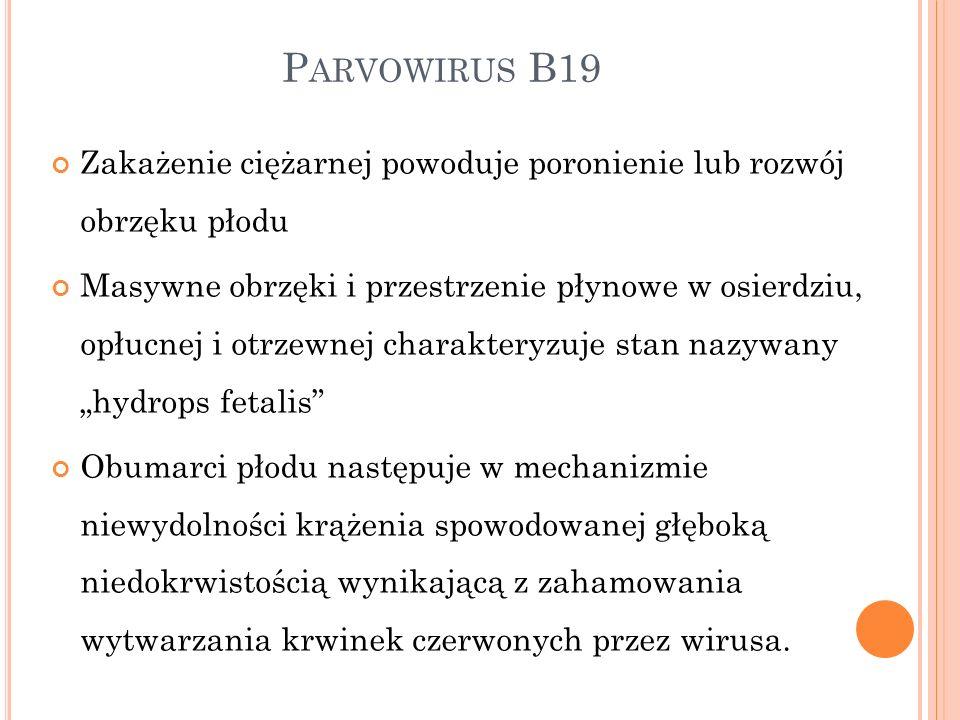 Parvowirus B19 Zakażenie ciężarnej powoduje poronienie lub rozwój obrzęku płodu.
