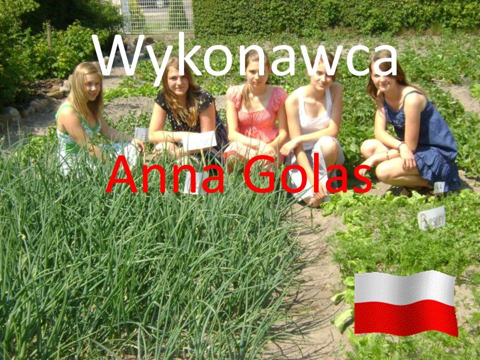 Wykonawca Anna Golas
