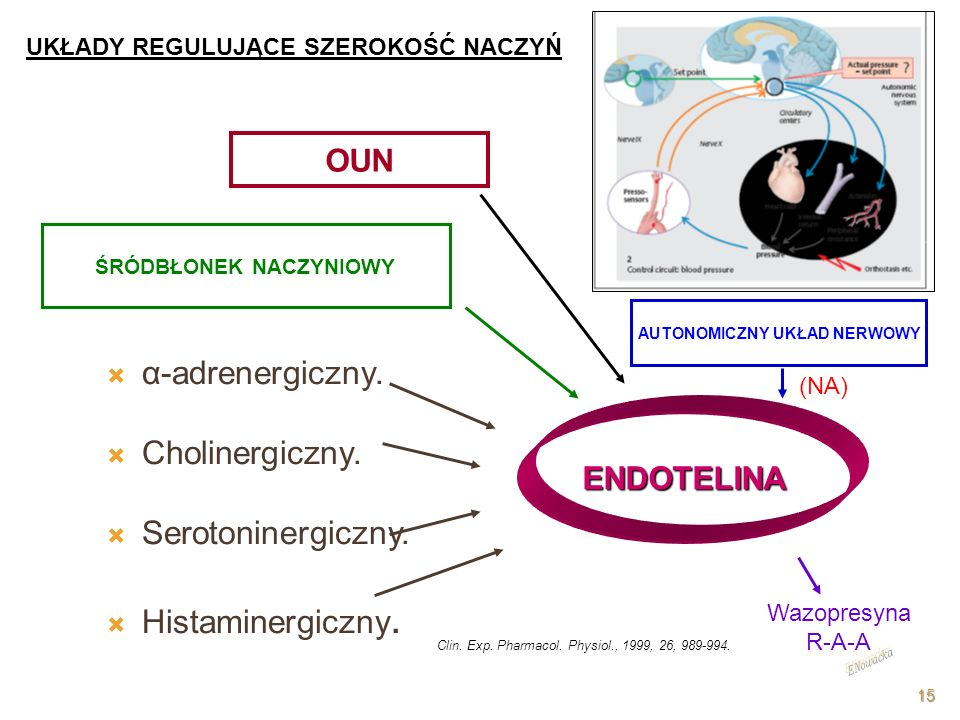 α-adrenergiczny. Cholinergiczny. Serotoninergiczny. Histaminergiczny.
