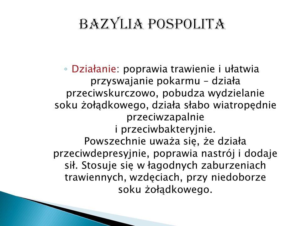 Bazylia pospolita