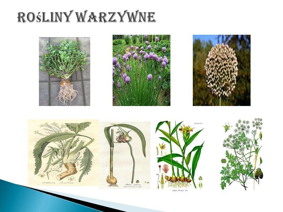 Rośliny warzywne