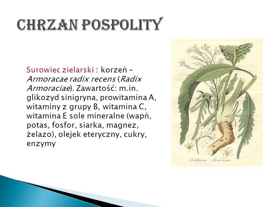 Chrzan pospolity