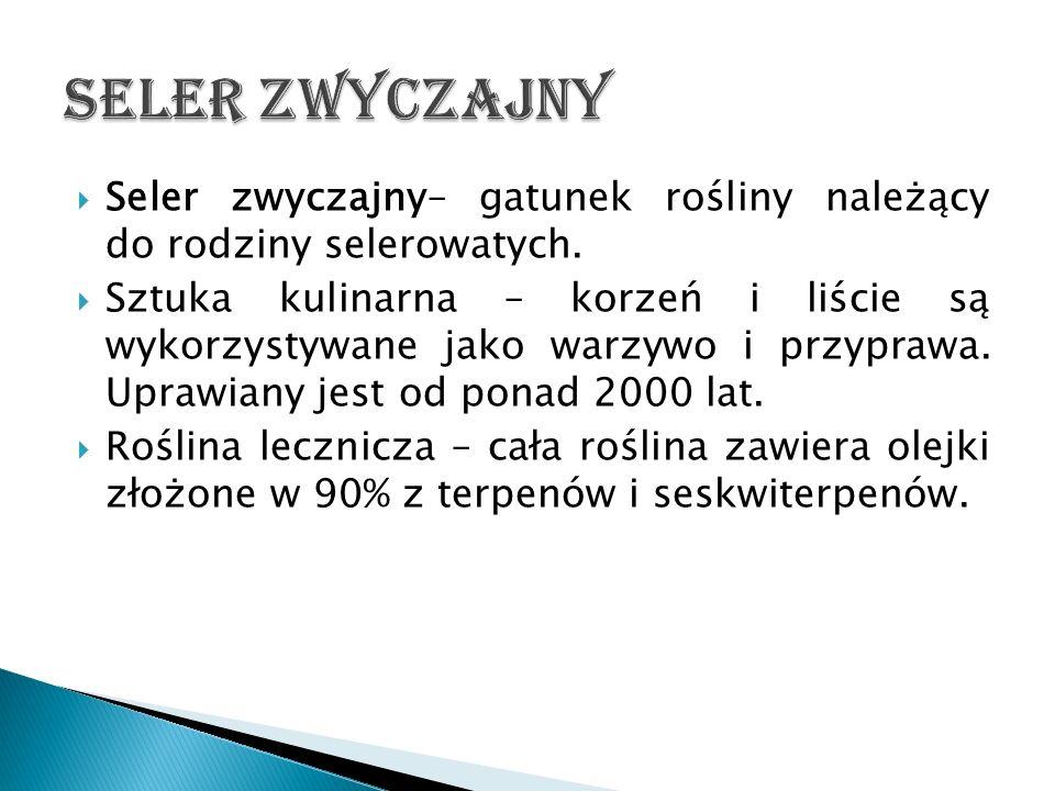 Seler zwyczajny Seler zwyczajny– gatunek rośliny należący do rodziny selerowatych.