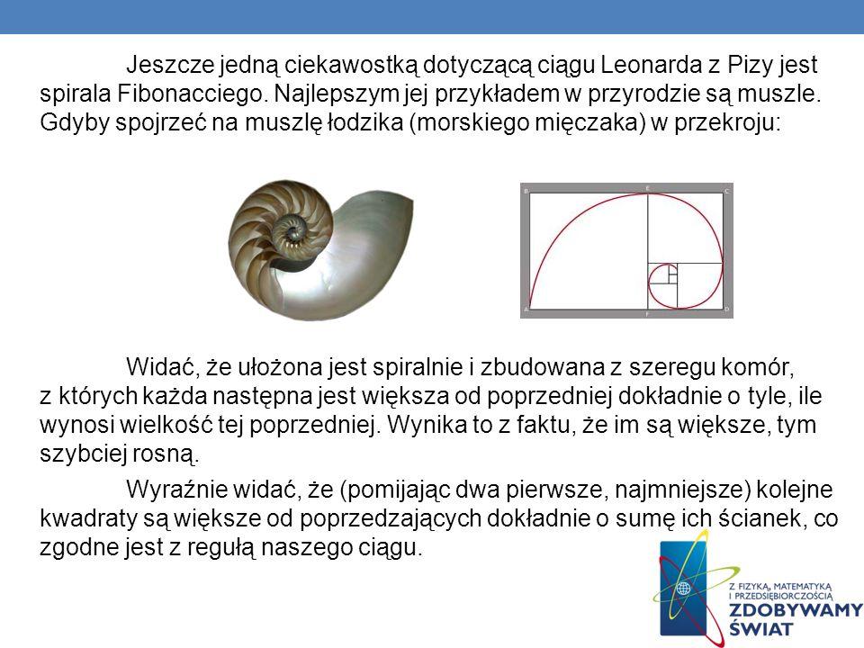 Jeszcze jedną ciekawostką dotyczącą ciągu Leonarda z Pizy jest spirala Fibonacciego. Najlepszym jej przykładem w przyrodzie są muszle. Gdyby spojrzeć na muszlę łodzika (morskiego mięczaka) w przekroju: