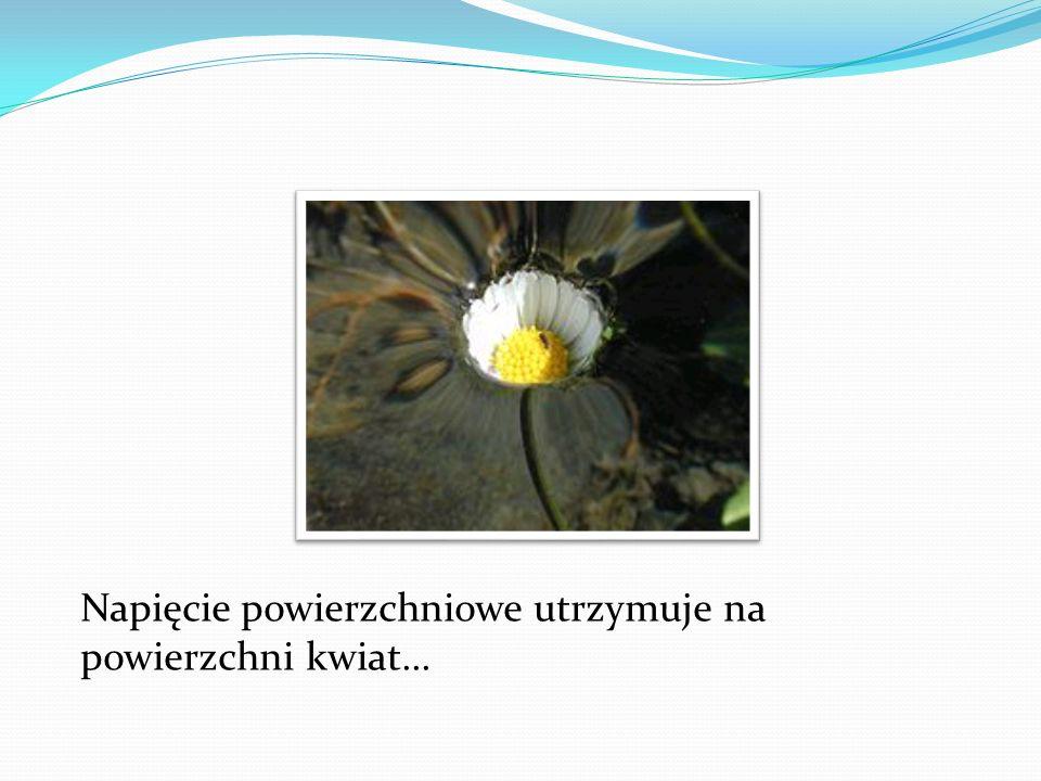 Napięcie powierzchniowe utrzymuje na powierzchni kwiat...