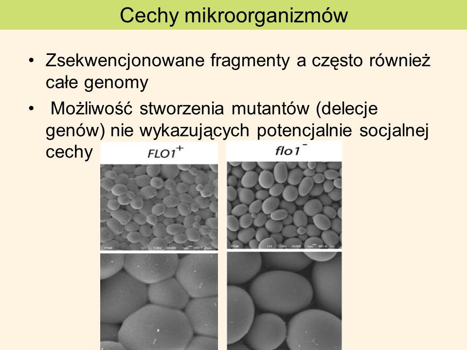 Cechy mikroorganizmów