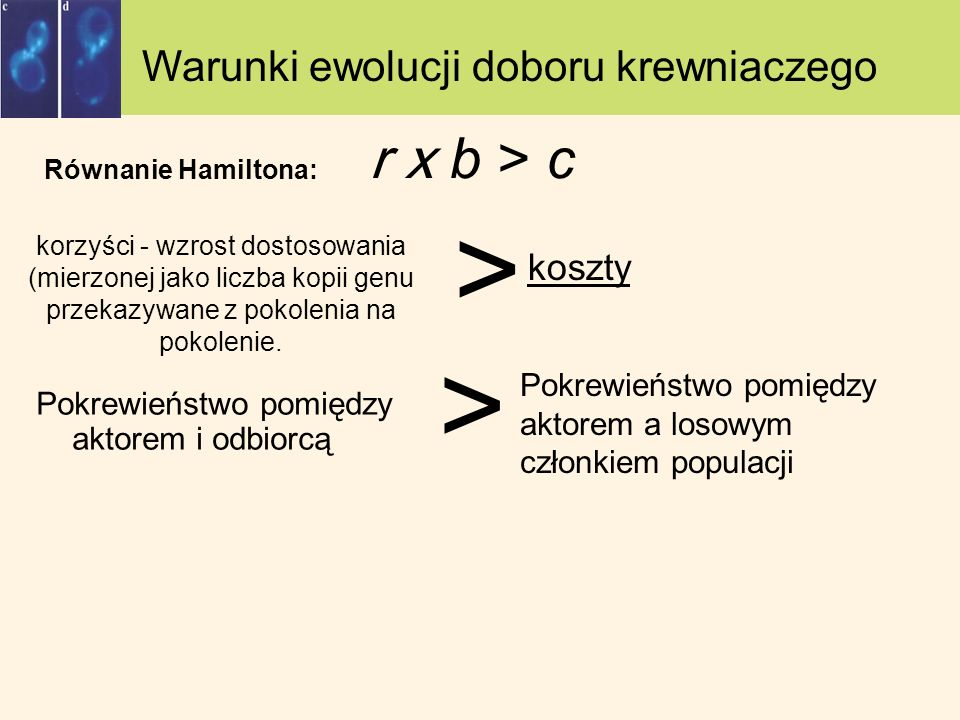 Warunki ewolucji doboru krewniaczego