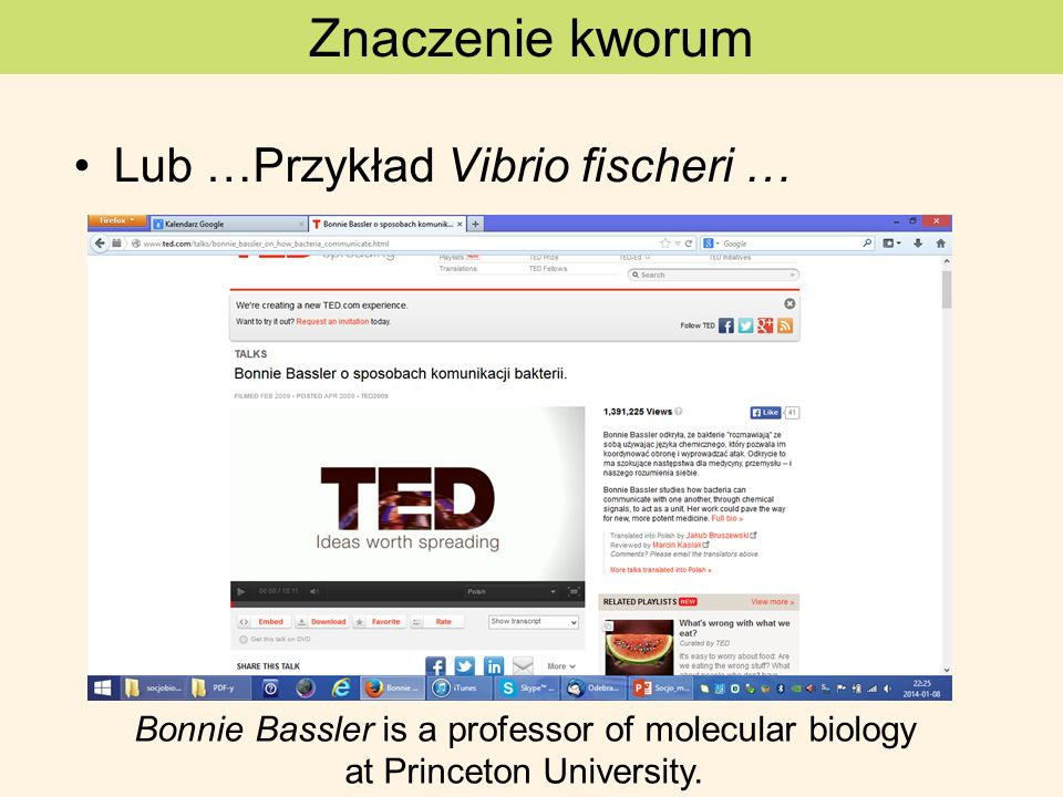 Znaczenie kworum Lub …Przykład Vibrio fischeri …