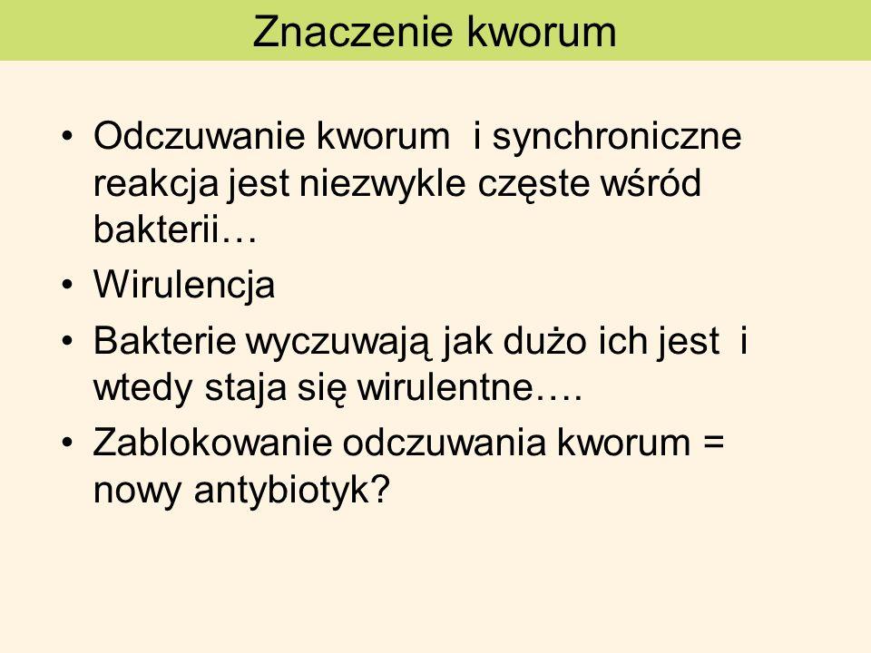Znaczenie kworum Odczuwanie kworum i synchroniczne reakcja jest niezwykle częste wśród bakterii… Wirulencja.