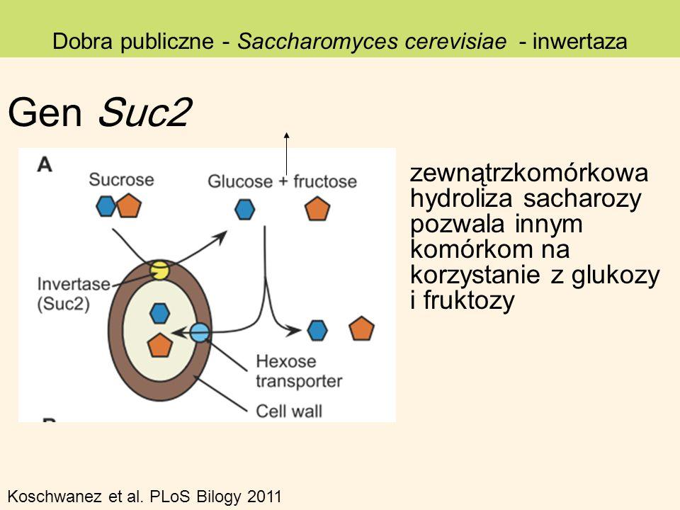 Dobra publiczne - Saccharomyces cerevisiae - inwertaza