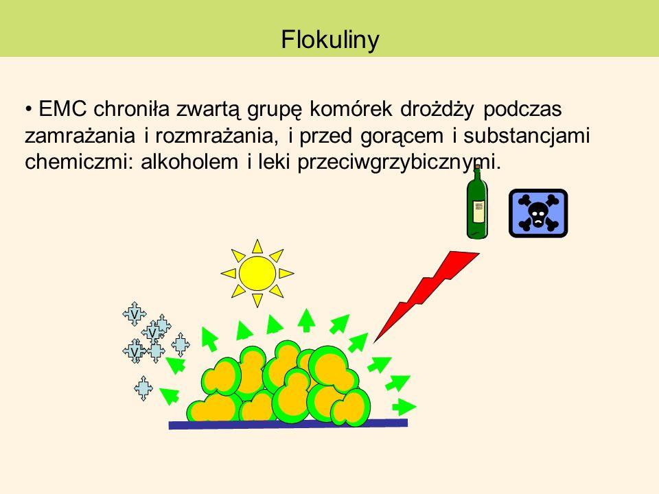 Flokuliny