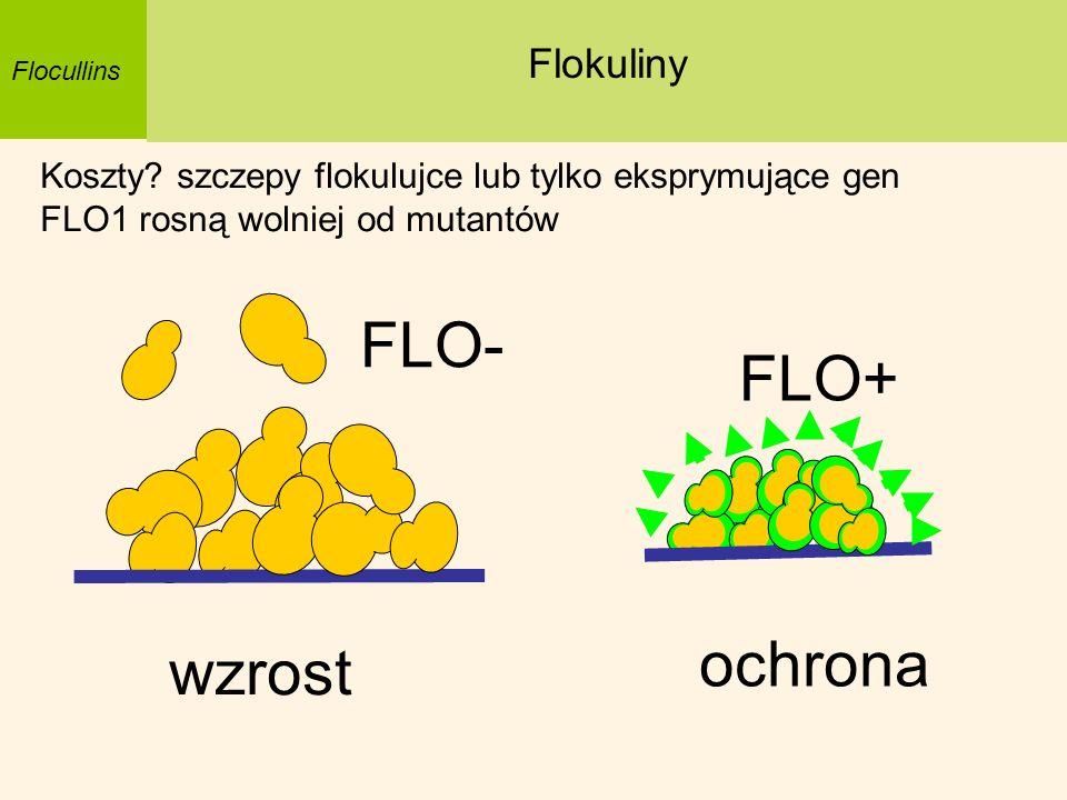 FLO- FLO+ ochrona wzrost Flokuliny