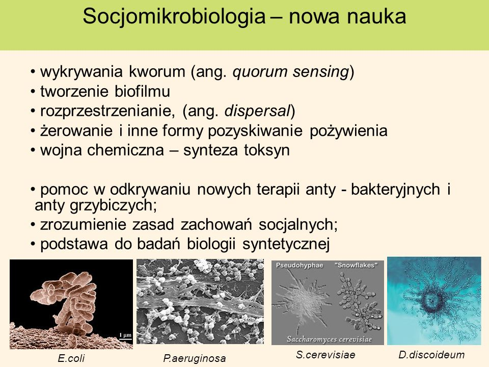Socjomikrobiologia – nowa nauka