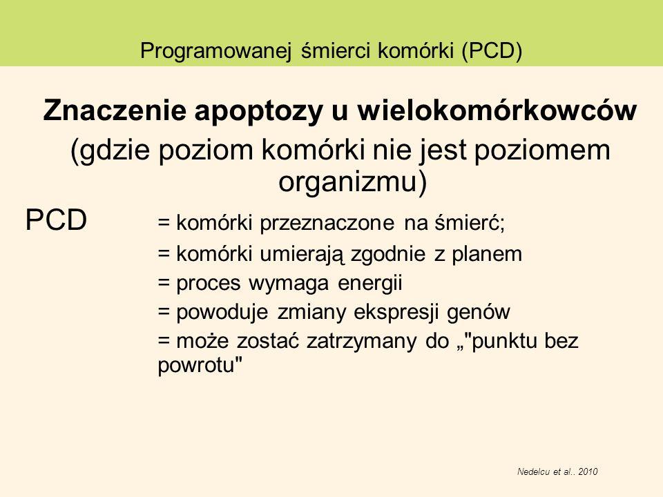 Znaczenie apoptozy u wielokomórkowców