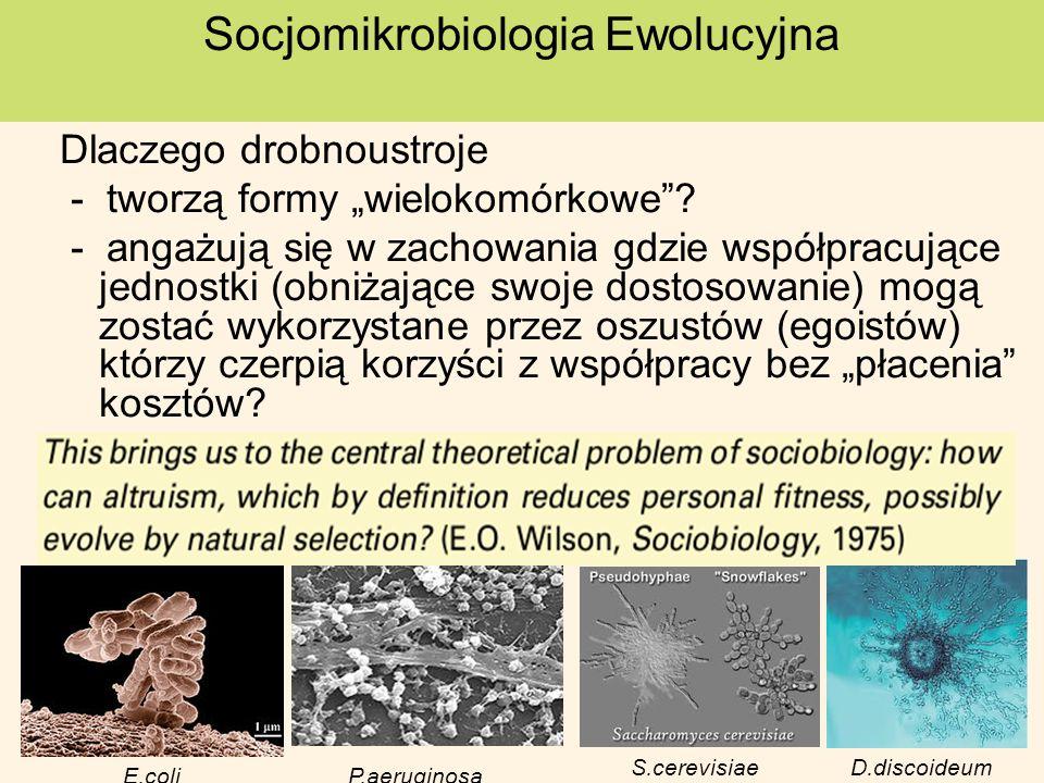 Socjomikrobiologia Ewolucyjna