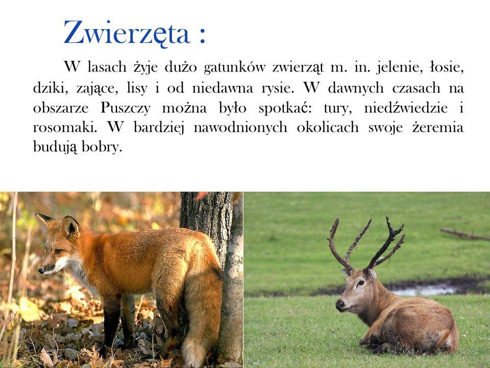 Zwierzęta :