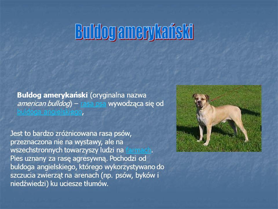 Buldog amerykański Buldog amerykański (oryginalna nazwa american bulldog) – rasa psa wywodząca się od buldoga angielskiego,