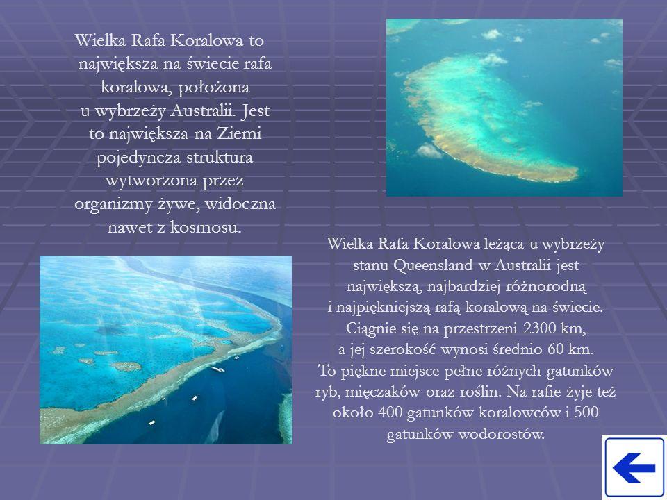 Wielka Rafa Koralowa to największa na świecie rafa koralowa, położona u wybrzeży Australii. Jest to największa na Ziemi pojedyncza struktura wytworzona przez organizmy żywe, widoczna nawet z kosmosu.