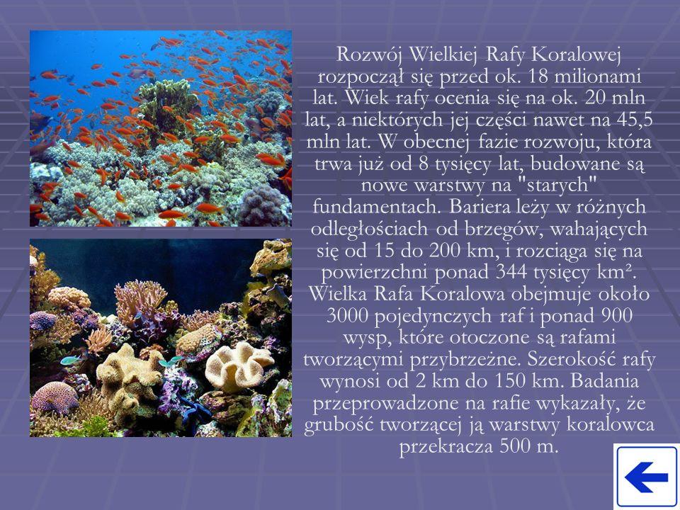 Rozwój Wielkiej Rafy Koralowej rozpoczął się przed ok.