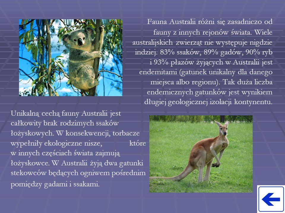 Fauna Australii różni się zasadniczo od fauny z innych rejonów świata