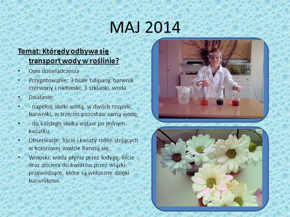 MAJ 2014 Temat: Którędy odbywa się transport wody w roślinie