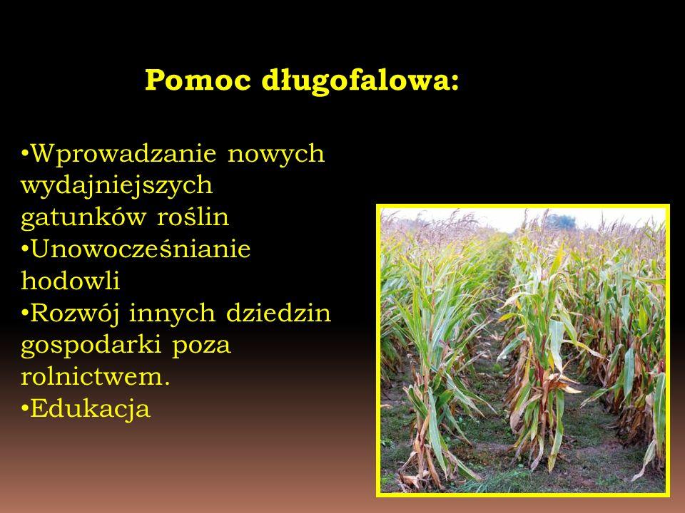 Pomoc długofalowa: Wprowadzanie nowych wydajniejszych gatunków roślin