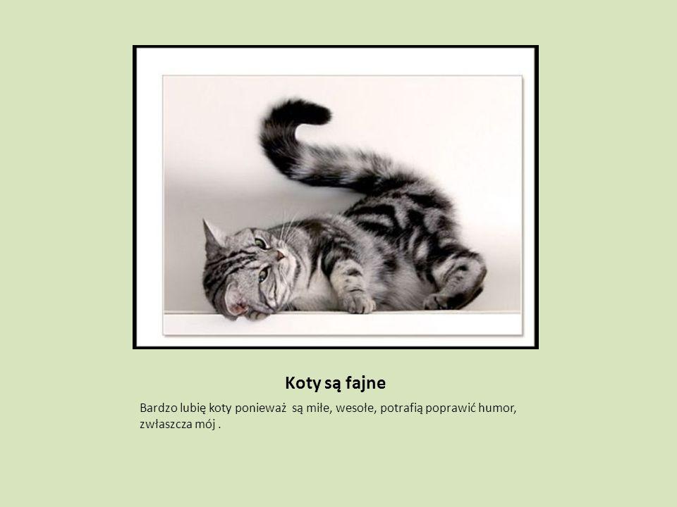 Koty są fajne Bardzo lubię koty ponieważ są miłe, wesołe, potrafią poprawić humor, zwłaszcza mój .