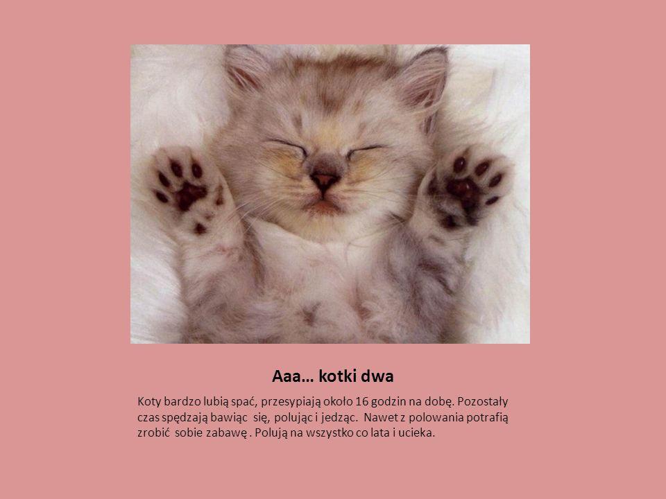 Aaa… kotki dwa