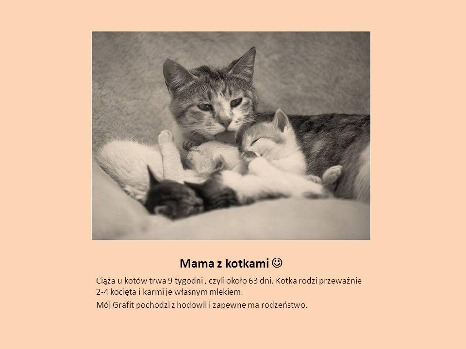 Mama z kotkami  Ciąża u kotów trwa 9 tygodni , czyli około 63 dni. Kotka rodzi przeważnie 2-4 kocięta i karmi je własnym mlekiem.
