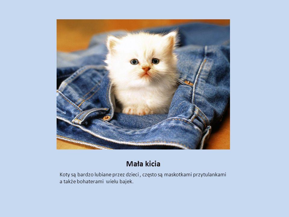 Mała kicia Koty są bardzo lubiane przez dzieci , często są maskotkami przytulankami a także bohaterami wielu bajek.