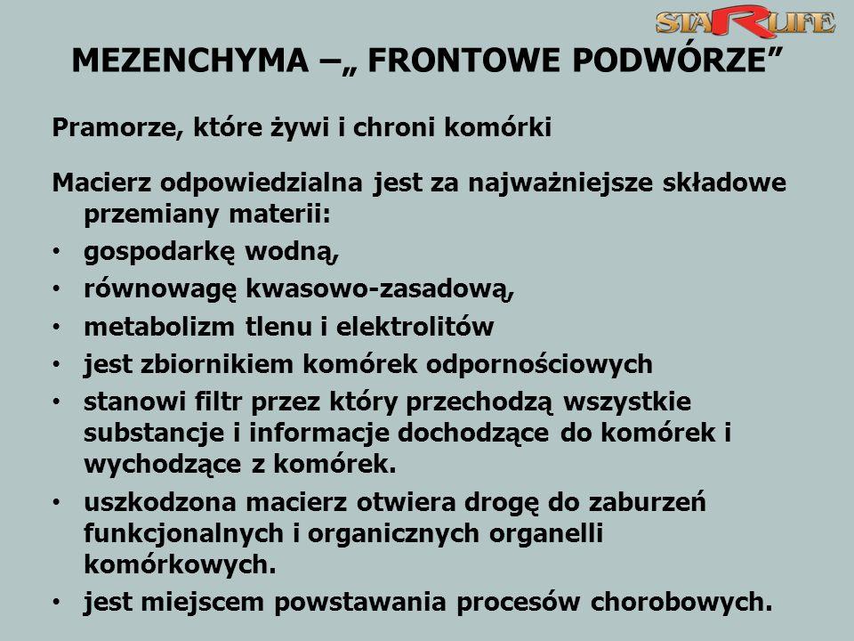 """MEZENCHYMA –"""" FRONTOWE PODWÓRZE"""