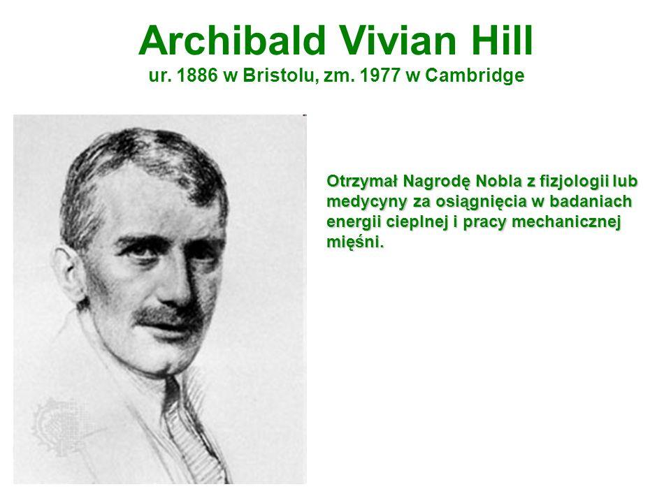 Archibald Vivian Hill ur. 1886 w Bristolu, zm. 1977 w Cambridge