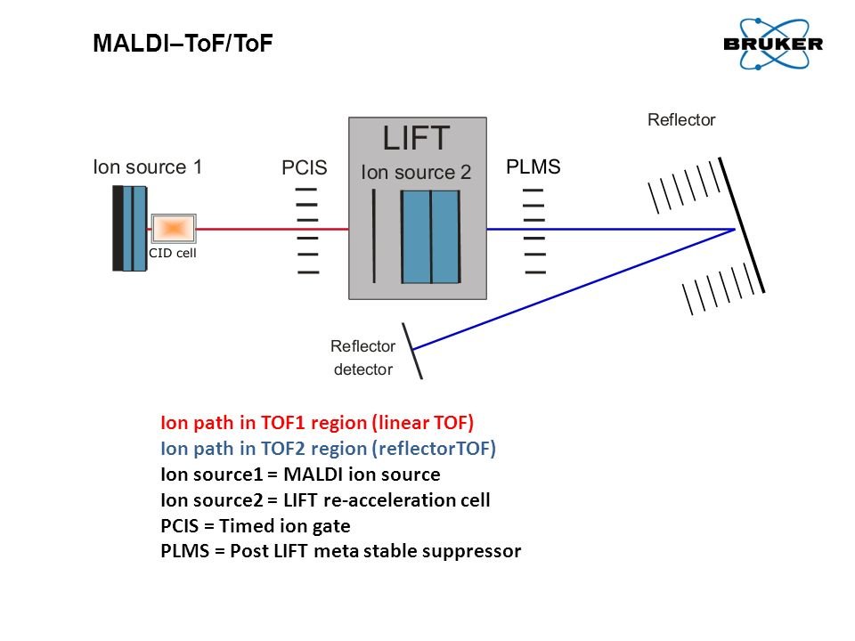MALDI–ToF/ToF Ion path in TOF1 region (linear TOF)
