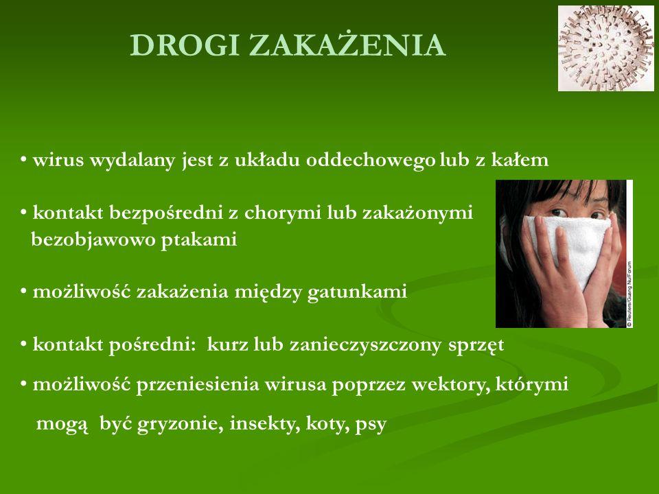 DROGI ZAKAŻENIA wirus wydalany jest z układu oddechowego lub z kałem