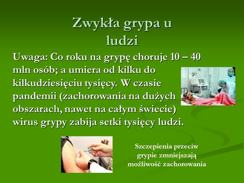 Szczepienia przeciw grypie zmniejszają możliwość zachorowania