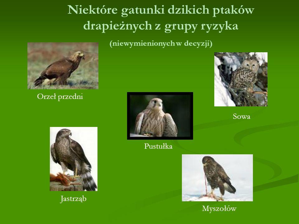 Niektóre gatunki dzikich ptaków drapieżnych z grupy ryzyka (niewymienionych w decyzji)