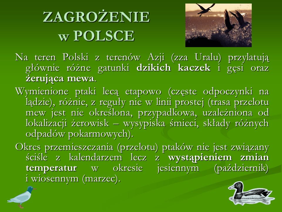 ZAGROŻENIE w POLSCE Na teren Polski z terenów Azji (zza Uralu) przylatują głównie różne gatunki dzikich kaczek i gęsi oraz żerująca mewa.