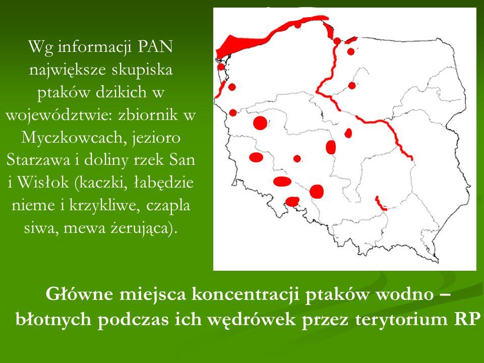 Wg informacji PAN największe skupiska ptaków dzikich w województwie: zbiornik w Myczkowcach, jezioro Starzawa i doliny rzek San i Wisłok (kaczki, łabędzie nieme i krzykliwe, czapla siwa, mewa żerująca).