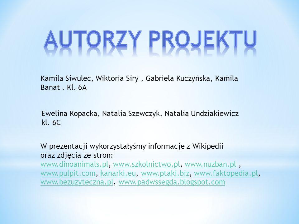 Autorzy projektu Kamila Siwulec, Wiktoria Siry , Gabriela Kuczyńska, Kamila Banat . Kl. 6A.