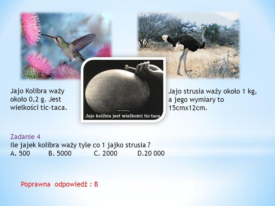 Jajo Kolibra waży około 0,2 g. Jest wielkości tic-taca.