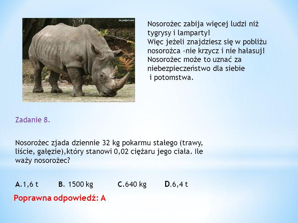 Nosorożec zabija więcej ludzi niż tygrysy i lamparty!